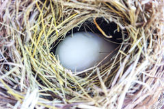 White egg in the nest Royalty Free Stock Image