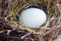 White egg in the nest Stock Images