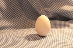 White egg for painting Royalty Free Stock Photography