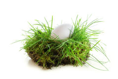 White egg in a piece of turf isolated on white background Stock Photo