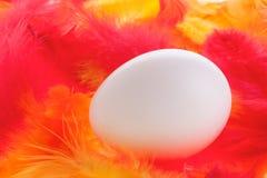 White egg on plumage Royalty Free Stock Photo