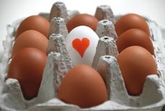 A box of eggs for egg lovers royalty free stock photo