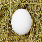 White egg in the straw. White egg in the yellow straw Royalty Free Stock Image