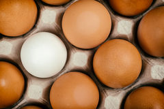 White egg surrounded by brown eggs Royalty Free Stock Images