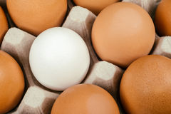 White egg surrounded by brown eggs. Individuality and difference Royalty Free Stock Photography
