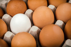 White egg surrounded by brown eggs Stock Image