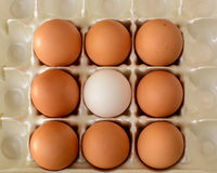A white egg surrounded by brown eggs Royalty Free Stock Photography