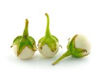 White eggplant Royalty Free Stock Photo