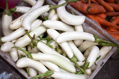 White eggplant Royalty Free Stock Photography