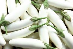 White eggplant or white aubergine Stock Photo