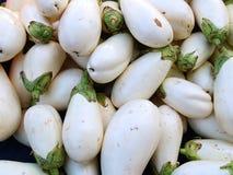 White Eggplants Stock Images