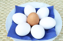 White eggs on a blue background Royalty Free Stock Images
