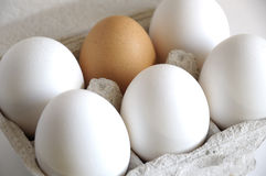 White eggs and brown. Brown eggs and a white in a carton package Stock Image