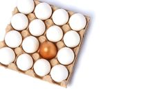 White eggs in a carton. And golden egg royalty free stock images