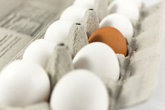 White eggs in carton with one brown egg Royalty Free Stock Photos
