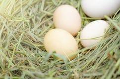 White eggs chicken, ducks, geese on fresh hay. Bird`s Nest. White eggs chicken, ducks, geese on fresh hay. Bird`s Nest royalty free stock photography