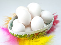 White eggs in an Easter egg. Surrounded by colorful feathers Royalty Free Stock Image