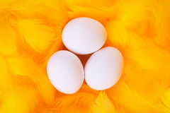 White eggs in feather nest Royalty Free Stock Photos