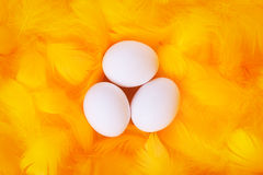 White eggs in feather nest Royalty Free Stock Images