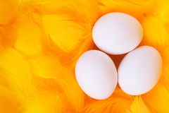 White eggs in feather nest Stock Image