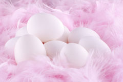 White eggs on feathers Stock Photos