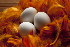 White eggs and feathers Stock Photography