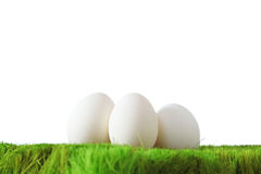 White eggs on green grass Stock Images