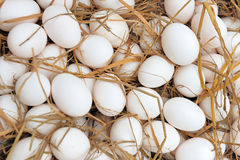 White eggs at hay nest Stock Images