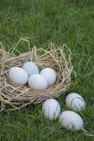 White eggs Stock Image