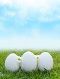White eggs Royalty Free Stock Images