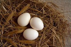 White eggs in a nest Stock Image
