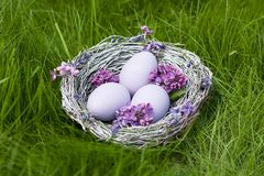 White eggs in a nest on green grass background Royalty Free Stock Images