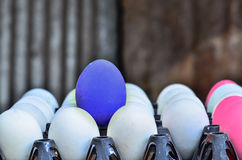 White eggs with one blue egg Stock Photography