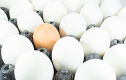 White eggs and one brown egg Royalty Free Stock Images