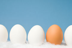 White eggs  and one brown egg in a row with blue b. White and brown eggs laying on white feathers with blue background Stock Photos