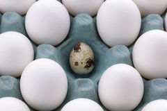 White Eggs in the packaging and quail egg Royalty Free Stock Images