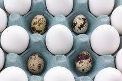White Eggs in the packaging and quail egg Stock Image