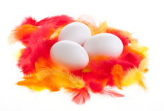 White eggs on plumage Stock Images
