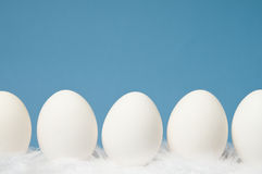 White eggs in a row with blue background. White eggs laying on white feathers with blue background Stock Image