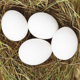White eggs in the straw. White eggs in the yellow straw Royalty Free Stock Photo