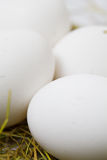 White eggs in the straw. White eggs in the yellow straw Stock Photography