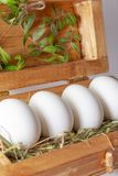 White eggs on straw in a wooden box.  royalty free stock photography
