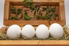 White eggs on straw in a wooden box stock image