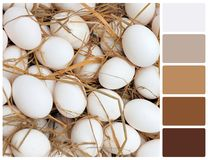 White eggs texture with palette color swatches Stock Photo