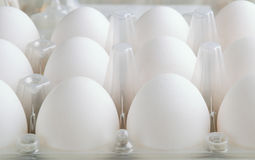 White eggs in tray horizontal Stock Photography