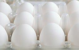 White eggs in tray horizontal stock photography