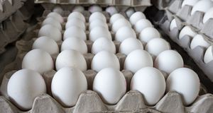 White eggs in tray sold at local farm market. White eggs in tray sold at local farmers market stock photo