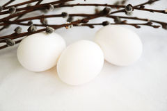 White eggs and willow branches. Preparation for Easter Stock Image