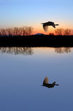 White Egret on Baby Blue Stock Photography
