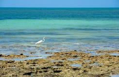 White Egret on beach Royalty Free Stock Photos